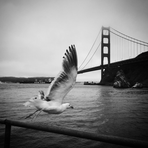 Seagull Golden Gate